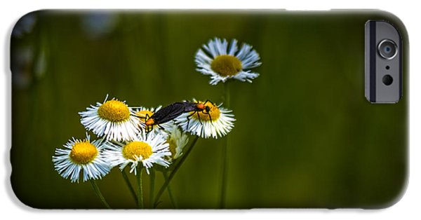 Floral Photographs iPhone Cases - Love Bugs iPhone Case by Marvin Spates