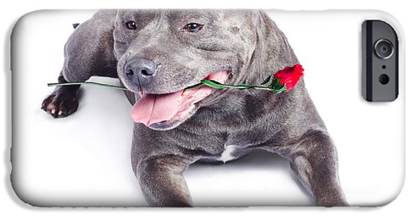 Cute Puppy iPhone Cases - Loving dog carrying red rose in mouth iPhone Case by Ryan Jorgensen