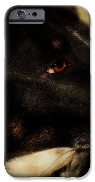 Black Dog iPhone Cases - Loyal  iPhone Case by Anita Faye
