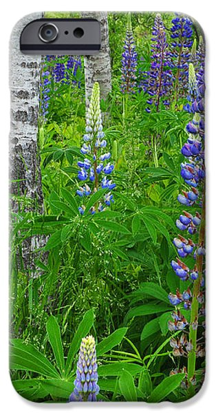Luminous Lupines and Aspen Trunk iPhone Case by Thomas Schoeller