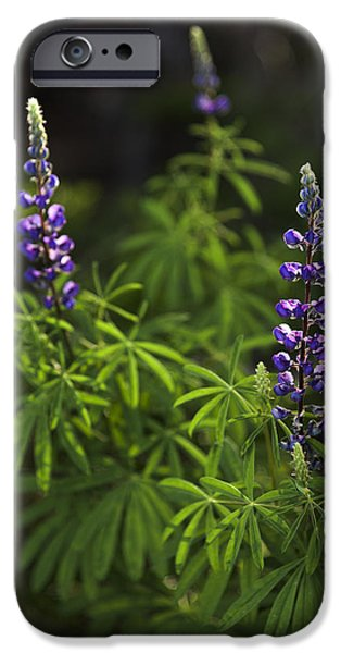 Meadow Photographs iPhone Cases - Lupine iPhone Case by Chad Dutson