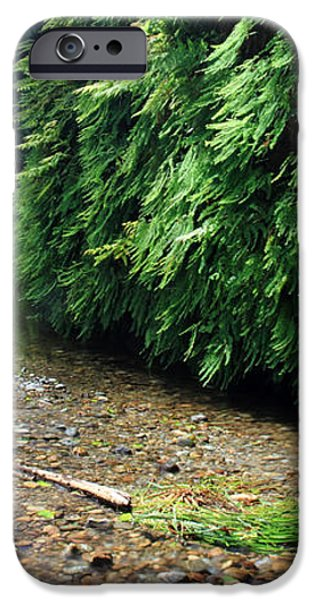 Lush Fern Canyon iPhone Case by Pierre Leclerc Photography