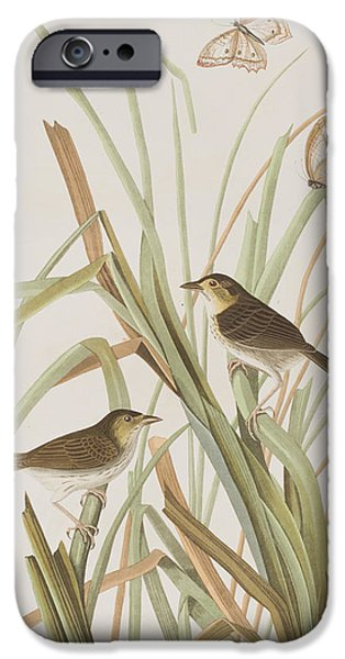 Insects Drawings iPhone Cases - MacGillivrays Finch  iPhone Case by John James Audubon