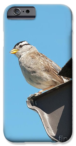Animals Photographs iPhone Cases - Macro photograph of Little bird  iPhone Case by Beth Wolff