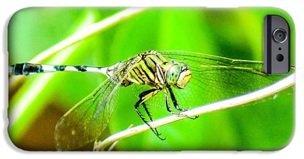 Macro Tapestries - Textiles iPhone Cases - Macro Photography iPhone Case by Shibin Kannan