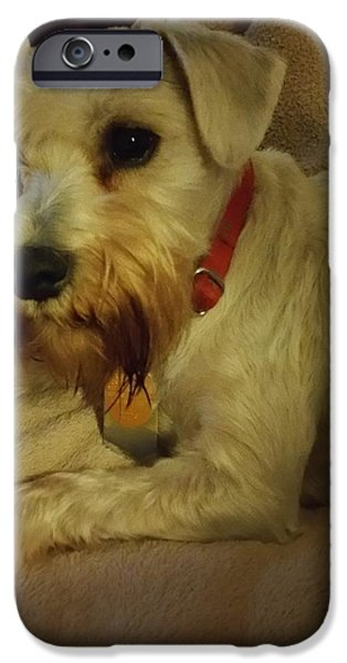 Puppies iPhone Cases - Madison Poses iPhone Case by Robin McCown