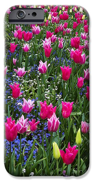Canada Photograph iPhone Cases - Magenta and White Tulips iPhone Case by Louise Heusinkveld