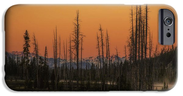 Tree Art Print iPhone Cases - Magic Morning iPhone Case by Michael J Samuels