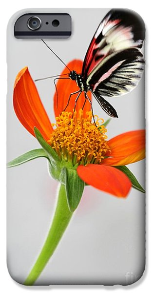 Piano iPhone Cases - Magical Butterfly iPhone Case by Sabrina L Ryan