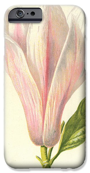 Botanical Drawings iPhone Cases - Magnolia iPhone Case by Frederick Edward Hulme