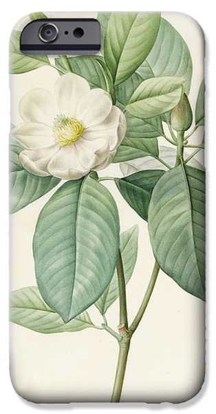 Flora Drawings iPhone Cases - Magnolia Glauca iPhone Case by Pierre Joseph Redoute