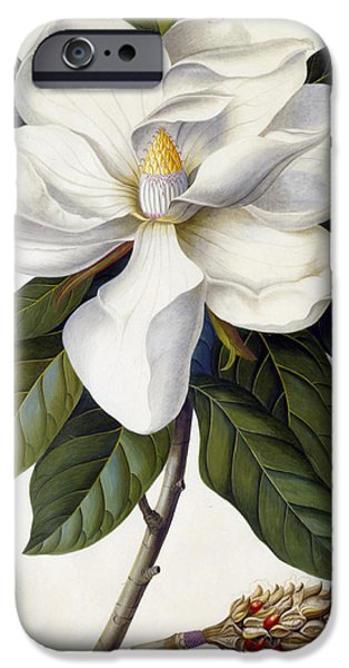 Botanical Drawings iPhone Cases - Magnolia grandiflora iPhone Case by Georg Dionysius Ehret