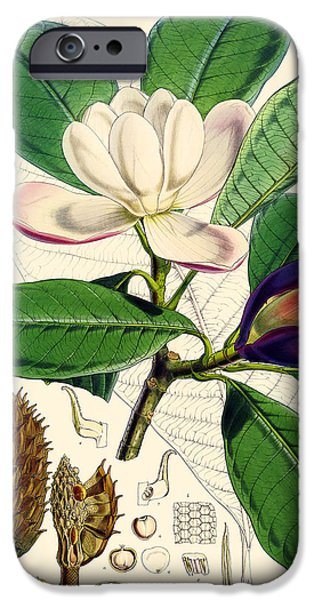 Flora Drawings iPhone Cases - Magnolia hodgsonii iPhone Case by Joseph Dalton Hooker