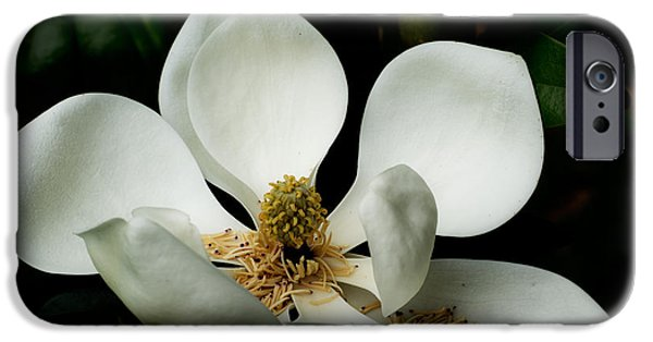 Spring Tapestries - Textiles iPhone Cases - Magnolia Time iPhone Case by James Hennis