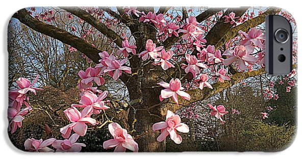 Tree Art Print iPhone Cases - Magnolia tree in spring iPhone Case by Vicky Adams