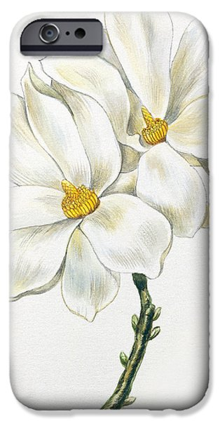 Flora Drawings iPhone Cases - Magnolia iPhone Case by Unknown