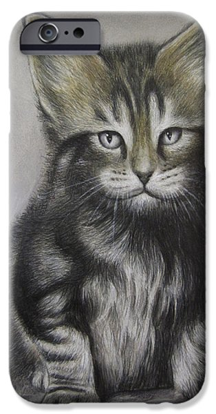 Maine Drawings iPhone Cases - Maine Coon portrait iPhone Case by Jonathan Anderson
