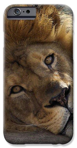 Majestic Love iPhone Case by Linda Mishler
