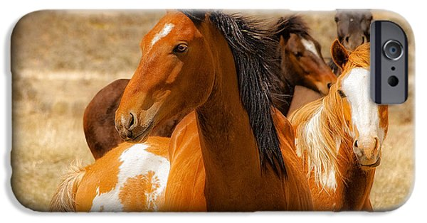 Horse iPhone Cases - Majestic Wild Stallion iPhone Case by Jerry Cowart
