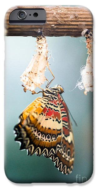 Young iPhone Cases - Malachite Butterfly iPhone Case by Peter Wey