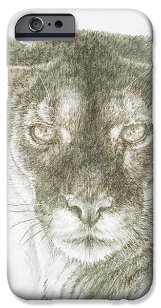 Animal Drawings iPhone Cases - Malcontent iPhone Case by Barbara Keith