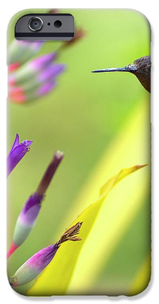 Male Anna's Hummingbird iPhone Case by Mike Herdering