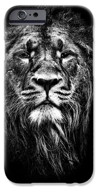 Animal Mixed Media iPhone Cases - Male Asiatic Lion iPhone Case by Meirion Matthias