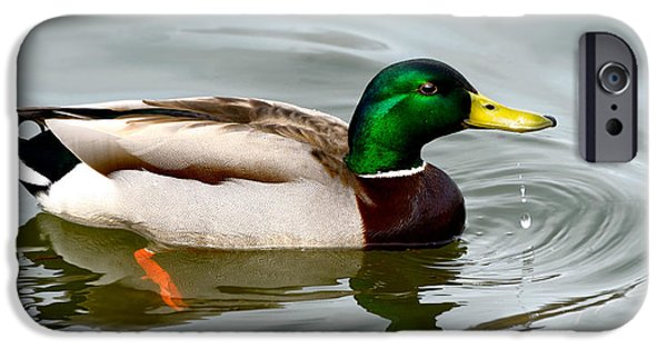 United States iPhone Cases - Male Mallard iPhone Case by Nancy Helmer