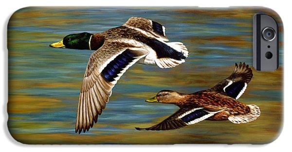 Bird In Flight iPhone Cases - Mallard Ducks iPhone Case iPhone Case by Crista Forest