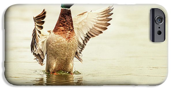 Ducks iPhone Cases - Mallard iPhone Case by Everet Regal