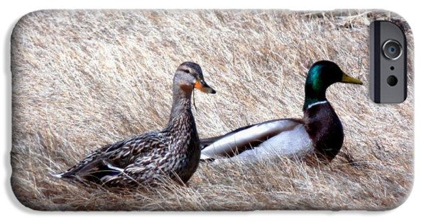 Cut-outs iPhone Cases - Mallards Enjoying The Warmth iPhone Case by Marcia Lee Jones