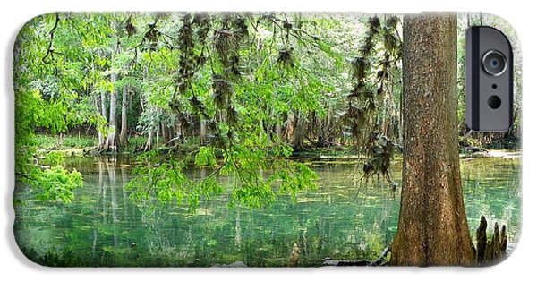 Chiefland iPhone Cases - Manatee Beauty iPhone Case by Sheri McLeroy
