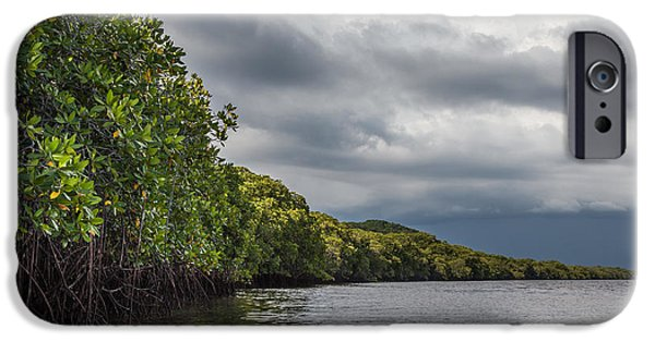 Mangrove Forest iPhone Cases - Mangrove Forest iPhone Case by Ben Adkison