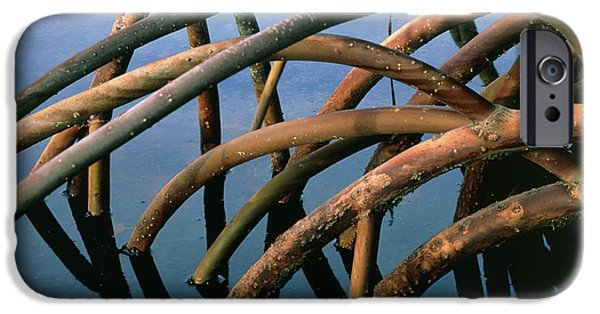 Mangrove iPhone Cases - Mangrove Roots In A Swamp In Hawaii iPhone Case by G. Brad Lewis
