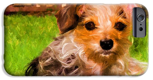 Dog Close-up iPhone Cases - Mans Best Friend  iPhone Case by Barbara Fagan Sullivan