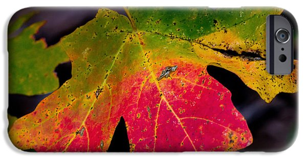 West Fork iPhone Cases - Maple Leaf Closeup iPhone Case by Karen Martin
