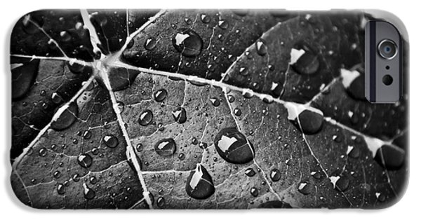 Nature Abstract iPhone Cases - Maple Leaf iPhone Case by Danny Pugh