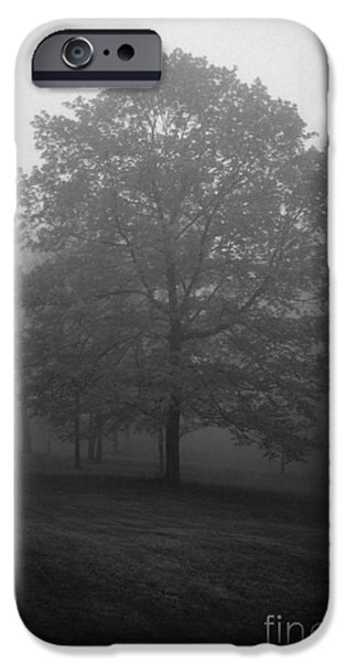 Southern Indiana iPhone Cases - Maple Tree in Fog iPhone Case by Lowell Anderson