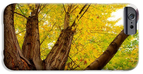 Autumn iPhone Cases - Maple Tree Poster iPhone Case by James BO  Insogna