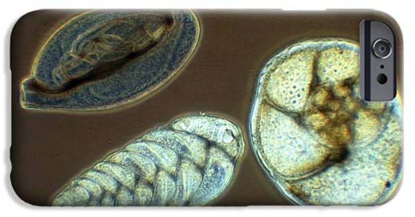 Microbiology iPhone Cases - Marine Foraminferan Tests LM iPhone Case by Greg Antipa