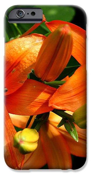 Marmalade Lilies iPhone Case by David Dunham