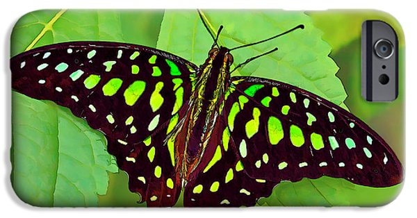 Shape iPhone Cases - Marvelous Malachite Butterfly 2 iPhone Case by Bill Caldwell -        ABeautifulSky Photography