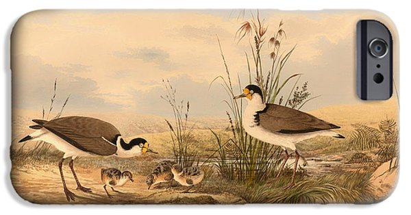 Lapwing iPhone Cases - Masked Lapwing iPhone Case by Neville HP Cayley