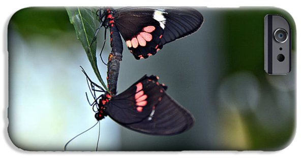 Insects Tapestries - Textiles iPhone Cases - Mating Butterflies iPhone Case by Edna Weber