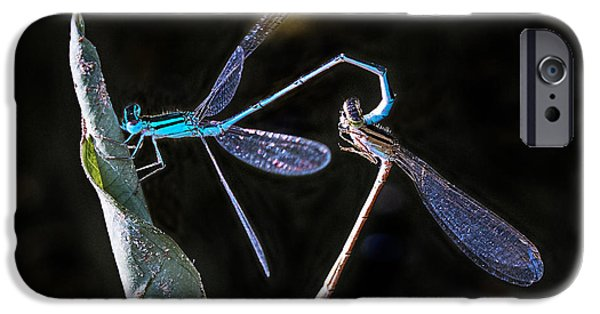 Stripes iPhone Cases - Mating Damselflies on a leave iPhone Case by Ronel Broderick