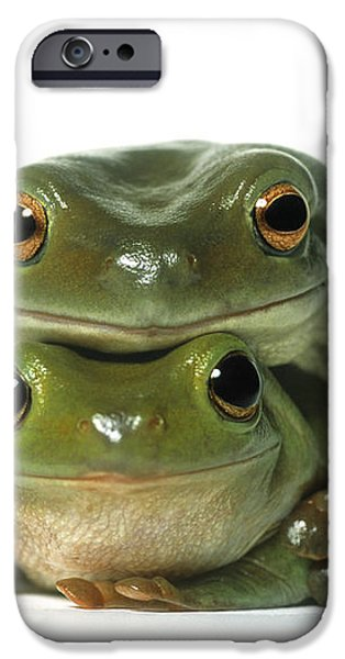 Mating Frogs iPhone Case by Darwin Wiggett