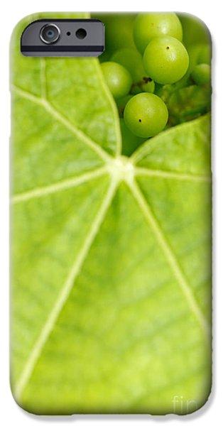 Maturing wine grapes iPhone Case by Gaspar Avila