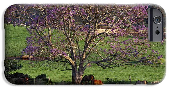 Jacaranda Tree iPhone Cases - Maui, Upcountry iPhone Case by Ron Dahlquist - Printscapes