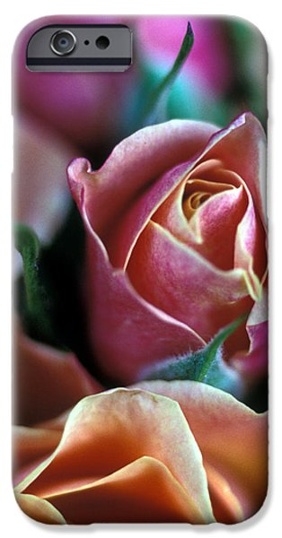 Mauve and Peach Roses iPhone Case by Kathy Yates