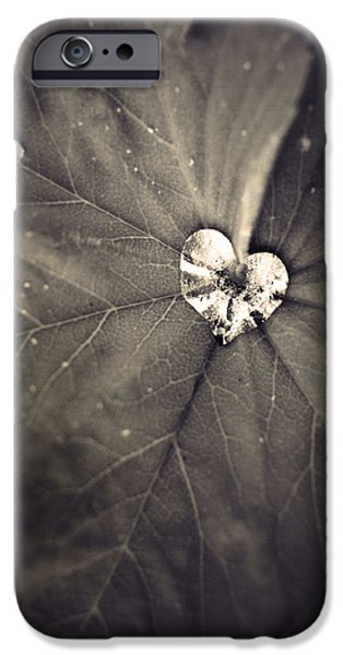 Monotone iPhone Cases - May 11 2010 iPhone Case by Tara Turner